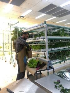 Michael Billings making Salad from Cotton Street Farm